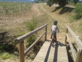 Nil pedaleando entre viñedos, en la ruta por las Bodegas Torres