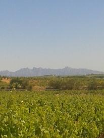 Vista excepcional de Montserrat desde Pacs del Penedès