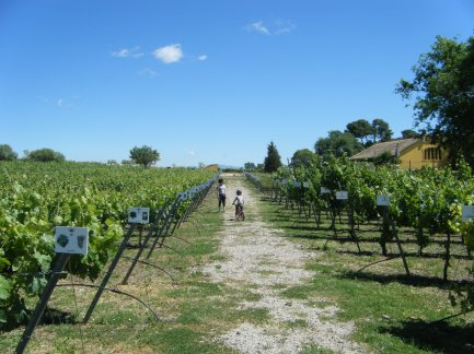 Sandra y Nil recorriendo un interesante paseo de variedades y métodos de cultivo de la vid, en Bodegas Torres.