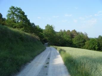 Cambio de ruta, del Ter, cambio de firme, grava entre campos de cereal en pleno desarrollo.