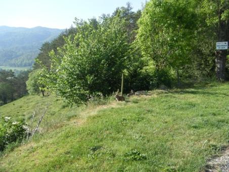 Serra del Puig d'Estela, conejos...