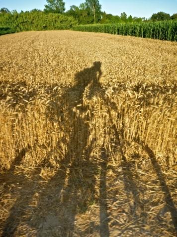 PAso por campos de cereales a punto para ser sembrados.