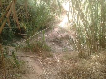 Pas de la Riera de Sentmenat del Camí a la Font de Can Roure. Pas complicat que necessita de cert arranjament.